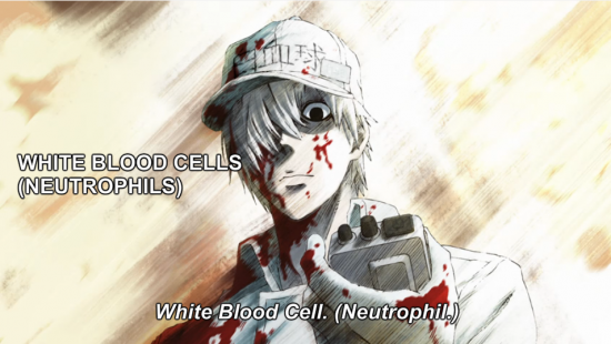 Mid-Week Review: Cells at Work! - Episode 1: Pneumococcus